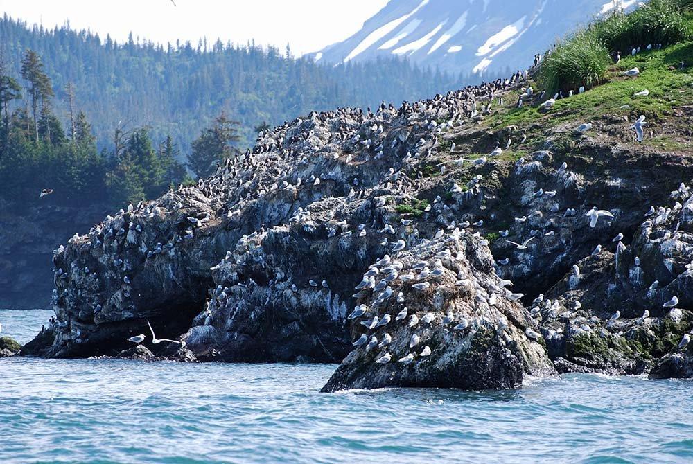 Flock of seabirds on cliffside