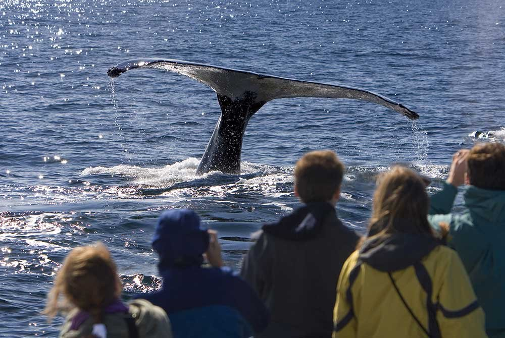 People watching whale tail submerge from water