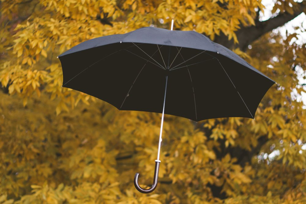 black umbrella in front of tree
