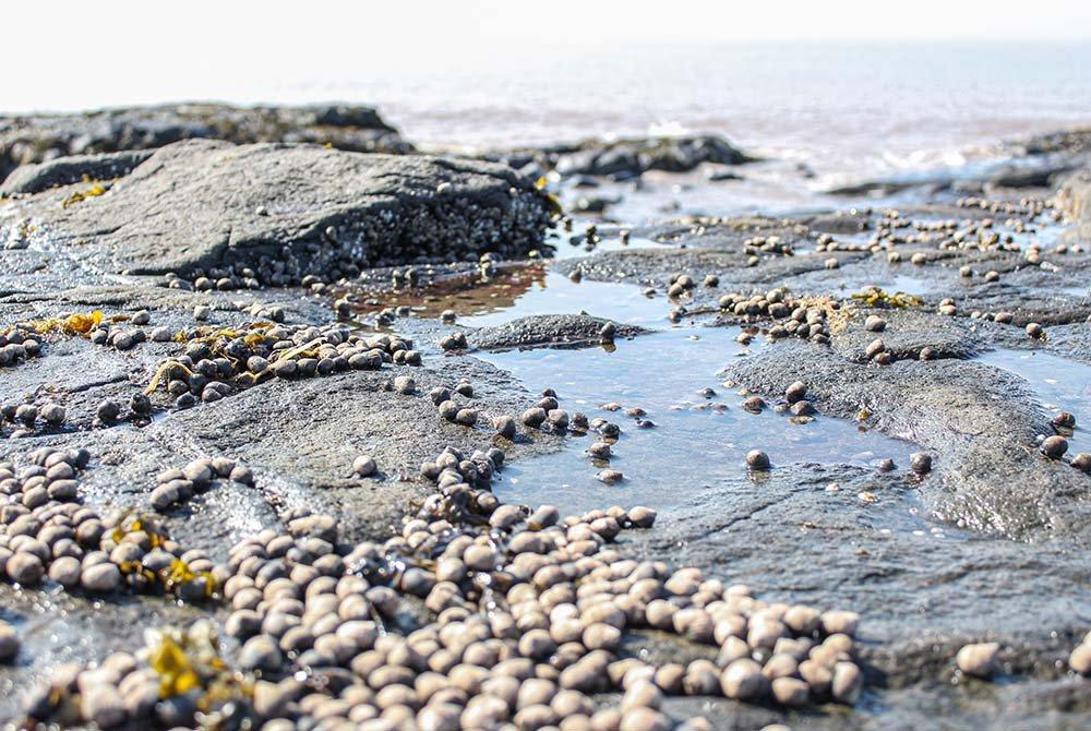 Clams littered on sandy beach