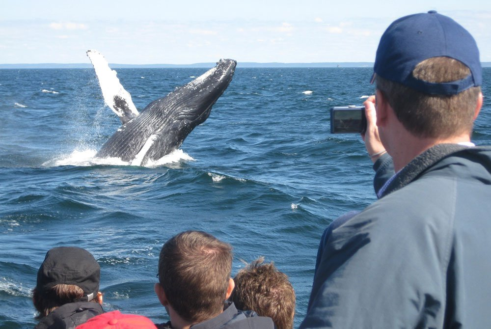 Whale jumping out of water next to people in motor boat
