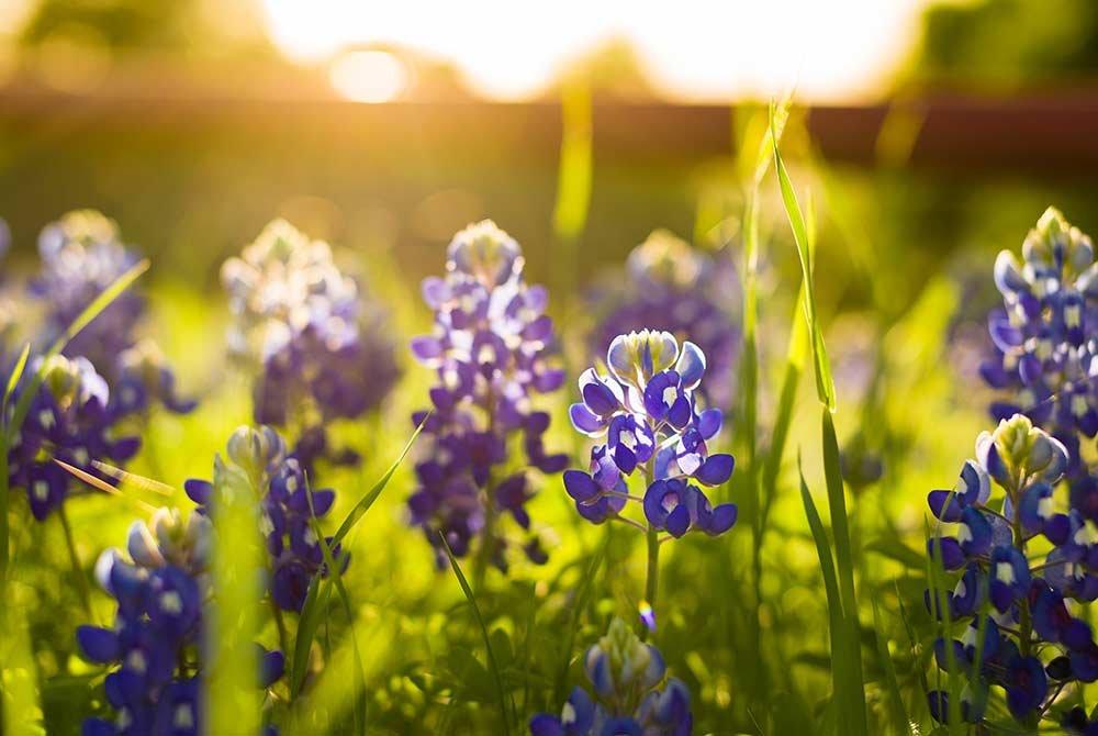 Sun glowing on flowers in field