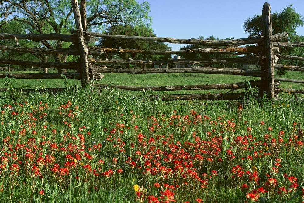 Field of flowers by wood fence