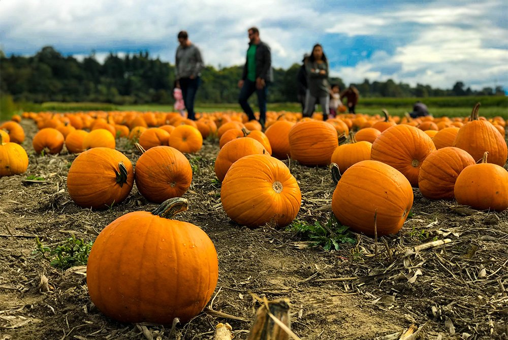 three people in a pumpkin patch