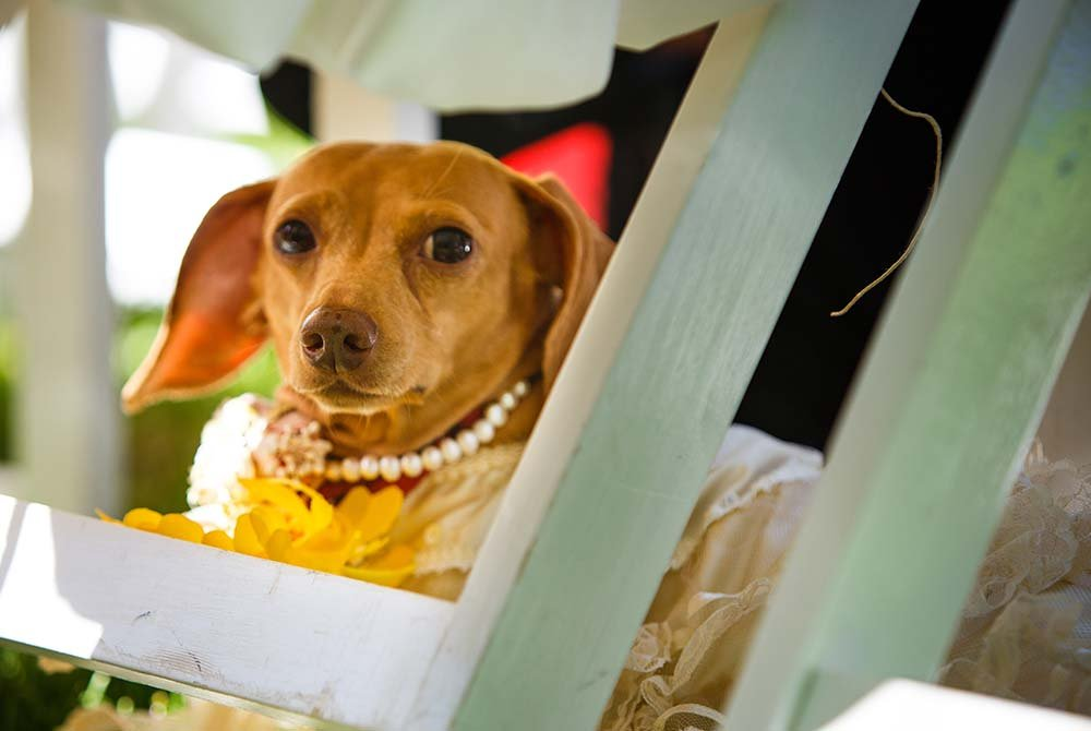 Dog with pearl necklace sitting in chair