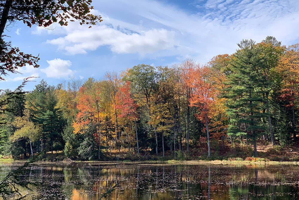 trees and lake in fall