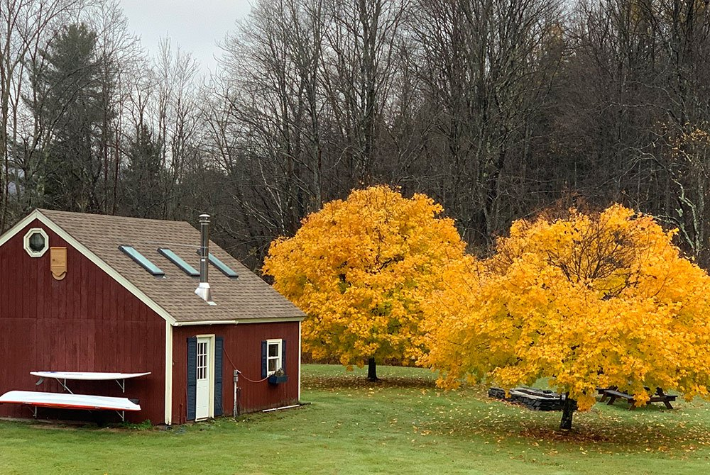 nutmeg yard trees in fall