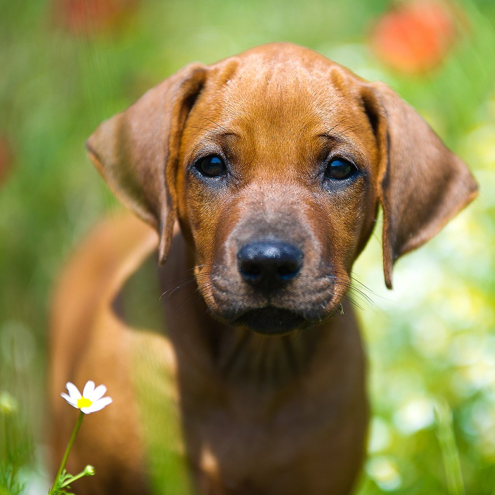 puppy in grass and flowers