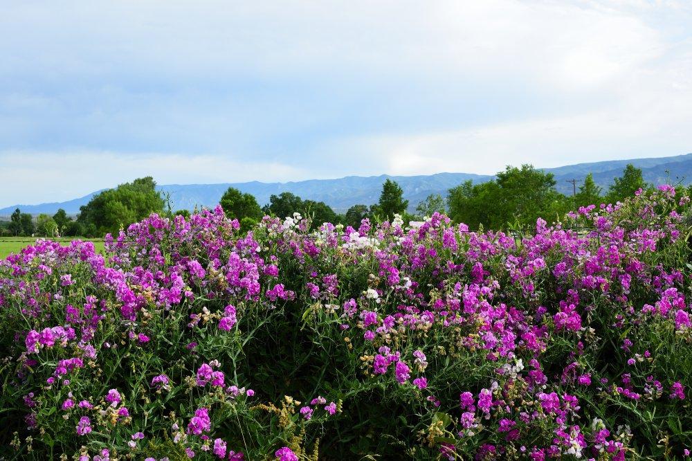Colorado Flowers