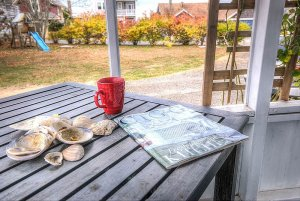 Magazine, cup, and shells on wood table outside