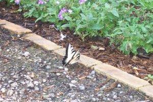 Butterfly in rockpit