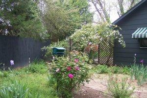 Flowers next to fence in garden