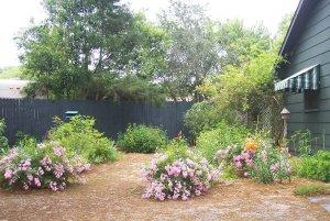 Flower bushes in yard