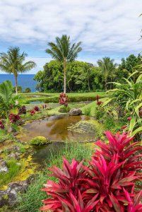 Pond with wild flowers