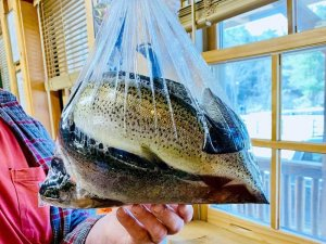 bagged trout