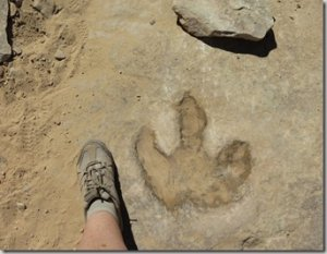 A person's foot near a dinosaur footprint