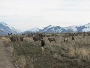 Wildlife near Salmon, Idaho