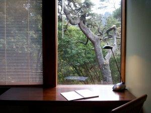 backyard window view