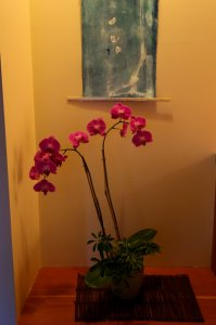 Ikebana flowers and painting