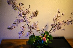 Cherry blossom ikebana