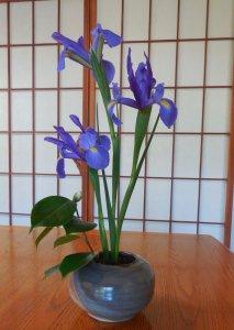 Iris Flower planting