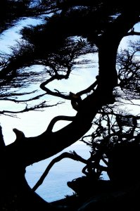 tree branch silhouettes in front of water