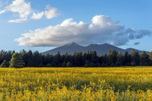 distant mountains and field of flowers | The Inn at 410, Downtown Flagstaff, AZ