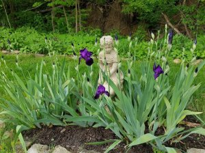 Statue in the garden surrounded by dark purple irises