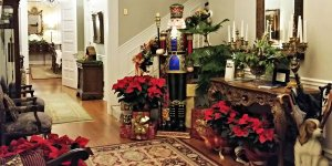 A room with several poinsettias and wrapped presents