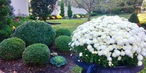 Flowering plant and shrubs