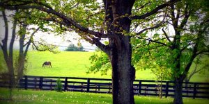A fenced horse pasture