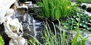A fountain with aquatic plants