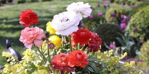 A variety of flowers in a flowerbed