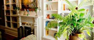 Small houseplant near a bookshelf
