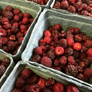 Raspberries in cartons