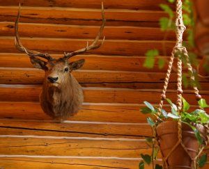 A mounted deer trophy and a hanging plant