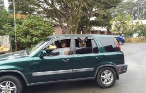 A couple and their dog in a compact SUV