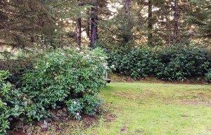 Flowering shrubs around a grassy area