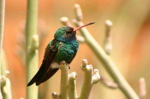 A bird on a bush