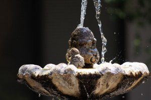 A bird sitting in a fountain