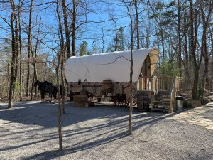 Covered Wagon and Draft Horses