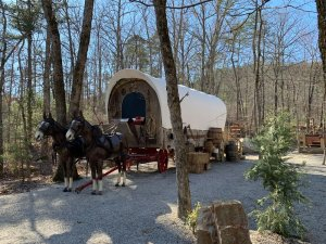 Draft Horses And Wagon Front