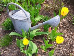 A watering can and flowers