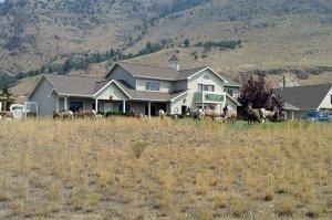 Yellowstone Basin Inn wildlife