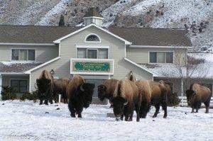 Yellowstone Basin Inn Eco lodging