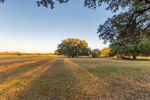Field View 1