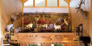Wildlife taxidermy Display
