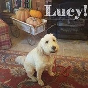 Lucy the dog seated on a rug