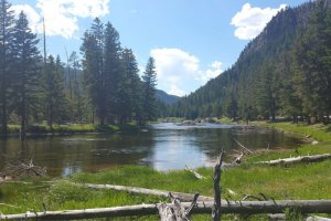 River and pine trees