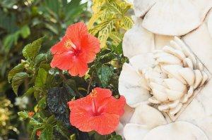 hibiscus flowers near a flower sculpture